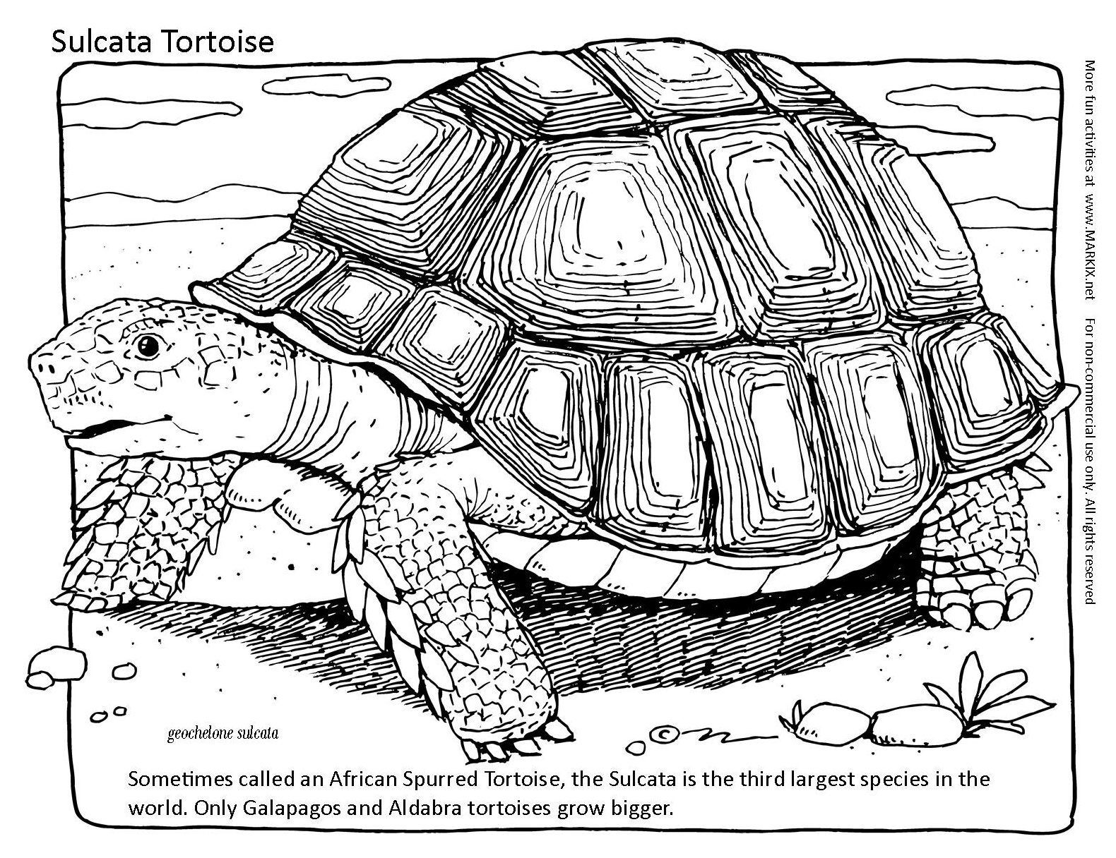 galapagos coloring pages - photo#37